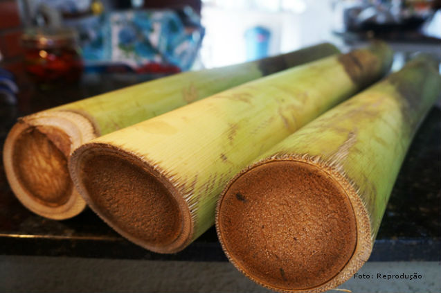 Produção de Palmito - limpeza do material colhido Artigos Cursos CPT