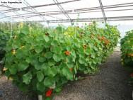 Sistema hidropônico de cultivo de hortaliças e plantas medicinais