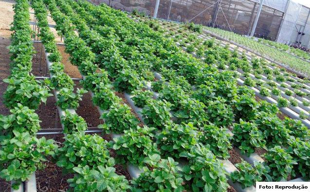 Sistema hidropônico de cultivo de hortaliças e plantas medicinais   Artigos Cursos CPT
