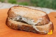 Os alimentos estão sujeitos a quais tipos de contaminação?