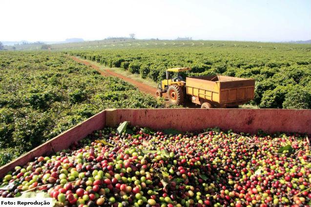 52,8 milhões de sacas de café no Brasil são esperados em 2016/2017    Notícias Cursos CPT