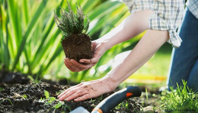 Princípio da agricultura orgânica   Artigos Cursos CPT
