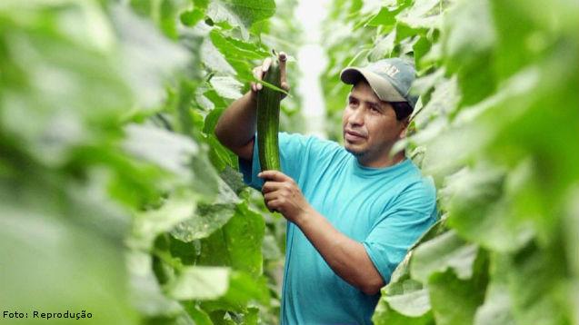 Por que optar pela agricultura orgânica?   Artigos Cursos CPT