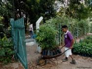 Reposição florestal é incentivada pela Câmara dos Deputados