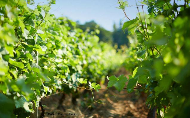 Por que os vinhos podem apresentar cores, aromas e sabores diferentes?   Dicas Cursos CPT