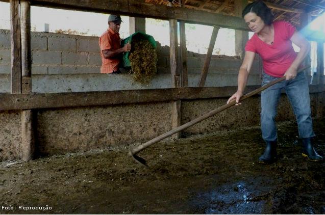 Manejo do esterco sólido do gado em confinamento -  Artigos Cursos CPT