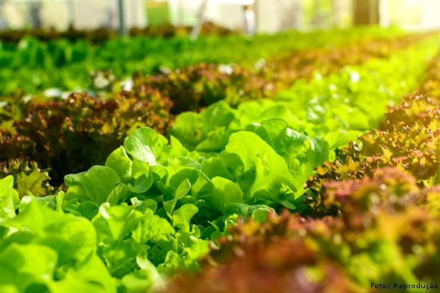 Por que a produtividade da lavoura depende do solo?   Artigos Cursos CPT
