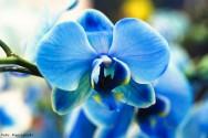 Saiba o que fazer para que sua orquídea dê flor