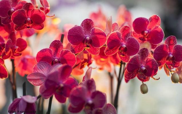 Saiba o que fazer para que sua orquídea dê flor   Artigos Cursos CPT