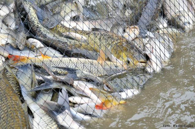 Construção de estruturas para produção de peixes   Artigos Cursos CPT