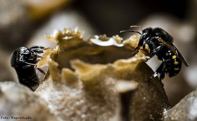 Flora apícola para a produção de mel    Artigos Cursos CPT