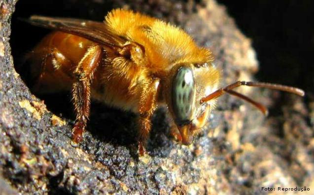 Ventos fortes prejudicam a produção de mel    Artigos Cursos CPT