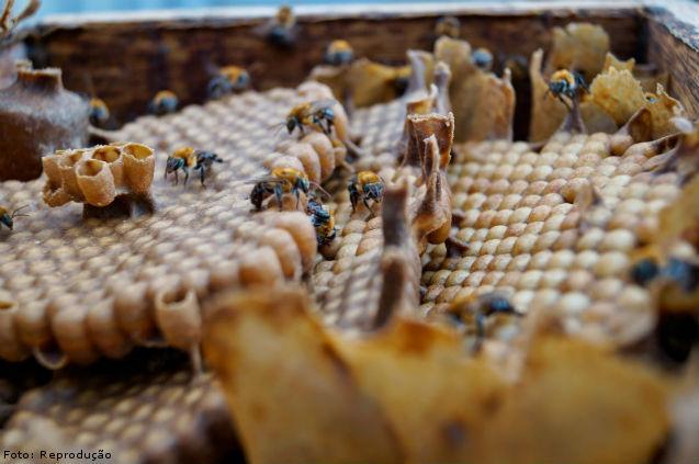 Meliponário de abelhas sem ferrão: como implantar   Artigos Cursos CPT