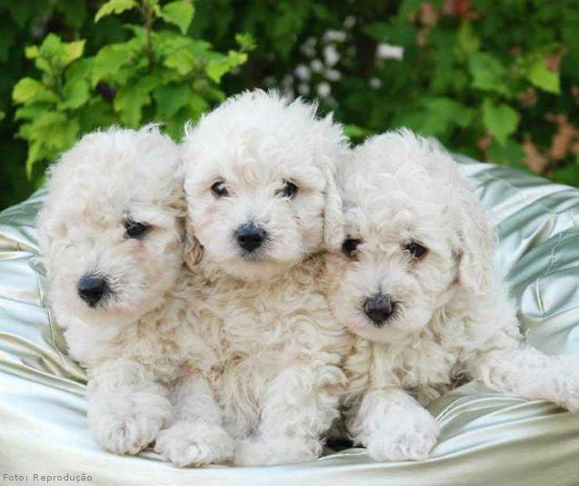 Como limpar os olhos dos cães?   Artigos Cursos CPT