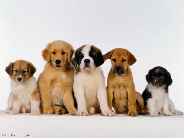 Como limpar os olhos dos cães?  Passo a passo  Artigos Cursos CPT