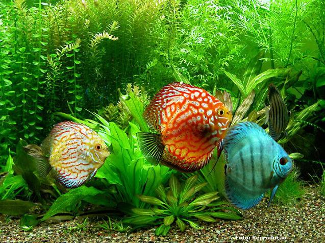 Tipos de filtros mecânicos para aquários   Artigos Cursos CPT