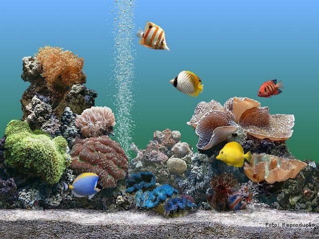 Filtros e bombas para aquários: tipos e características   Artigos Cursos CPT