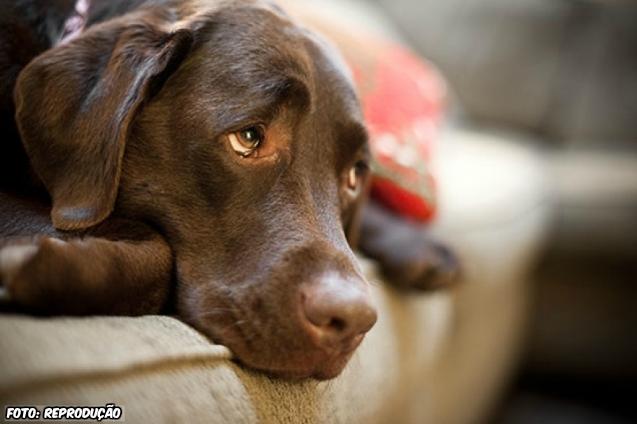 Convulsões em cães e gatos: porque isto acontece?   Dicas Cursos CPT