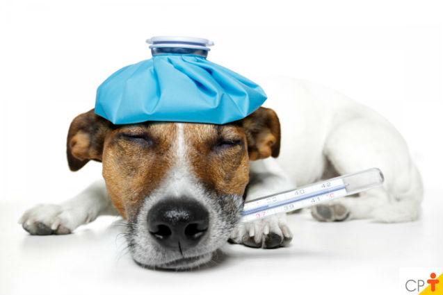 Kit de primeiros socorros para cães e gatos: itens essenciais   Artigos Cursos CPT