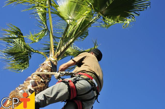 Industrialização do coco  Artigos Cursos CPT