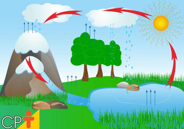 Evapotranspiração: o que é e qual a sua importância para as plantas?   Artigos Cursos CPT
