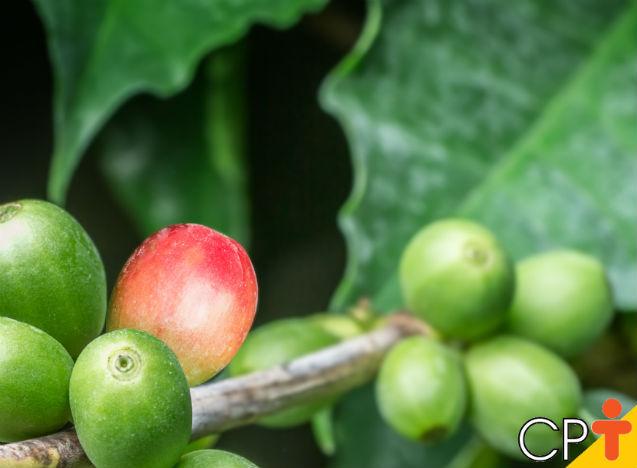 Como manter a qualidade do café?   Artigos Cursos CPT