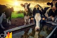 10 dicas para melhorar a produção de leite