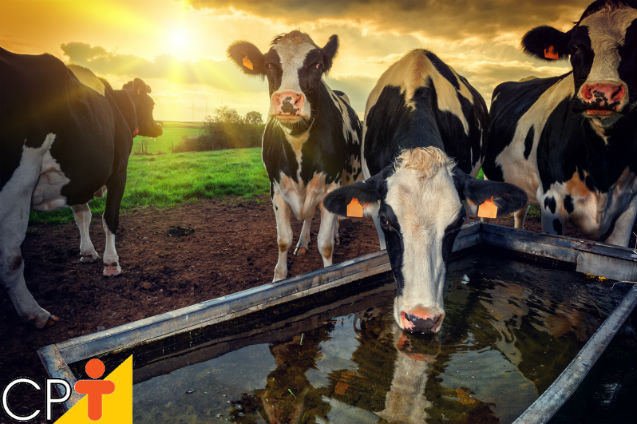 10 dicas para melhorar a produção de leite   Dicas Cursos CPT