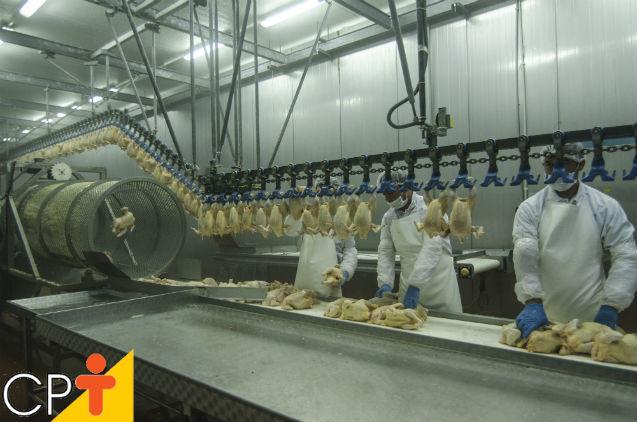 Evisceração de frangos e galinhas: etapas do procedimento   Dicas Cursos CPT