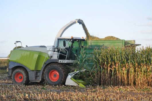 Como produzir uma boa silagem de milho