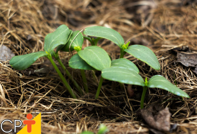 Plantio direto: técnica saudável de exploração agrícola do solo   Artigos Cursos CPT