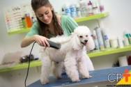 Cães da raça Poodle: saiba tudo sobre eles