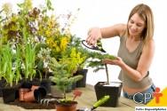 Manutenção de jardins: podas de limpeza e formação