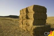 Qual o melhor lugar para plantar feno na fazenda?