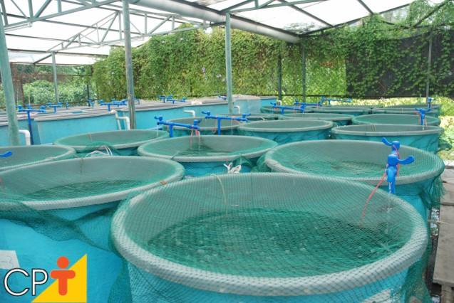 Água salgada artificial para a criação de camarões: como fazer   Artigos Cursos CPT