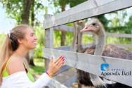 Dicas essenciais para iniciar uma criação de Avestruzes
