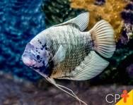Os peixes têm visão, olfato, tato, paladar e audição?