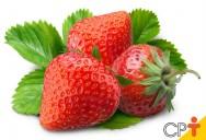 Morango orgânico: plantio correto garante o sucesso da produção