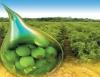 Produ��o de biodiesel � essencial � sustentabilidade do planeta