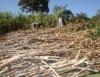 �lcool combust�vel pode ser produzido na fazenda