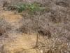 Recuperação de áreas degradadas acelera o processo  de sucessão ecológica