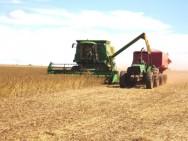 A falta de conhecimento, que muitos produtores rurais substimam, geralmente causa muito mais prejuízo econômico que a falta de créditos, subsídios e protecionismo.