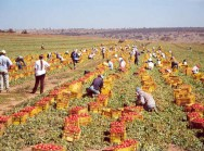 ... E as conquistas do agronegócio brasileiro