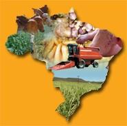 O mundo inteiro está de olho no Brasil porque já sabe que somos um dos principais produtores/exportadores de alimentos.