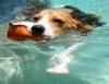 Hidroterapia é usada no tratamento de animais