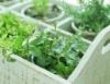 Aprenda Fácil Editora: Horta caseira: Uma alternativa para fugir dos agrotóxicos