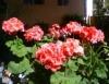 Faça um jardim na varanda
