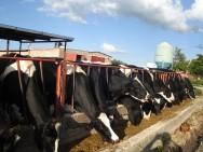 Produção leiteira deve crescer 4% neste ano