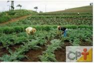 Plantas medicinais e aromáticas - horário de colheita