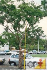 Planejamento de jardins: escolha da árvore